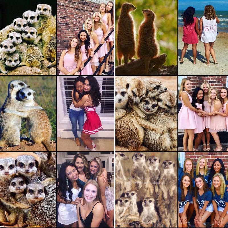 sorority sisters posing like meerkats 5 Someone Noticed Sorority Sisters Pose Like Meerkats and There are Photos to Prove It