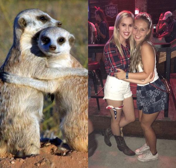 sorority sisters posing like meerkats 6 Someone Noticed Sorority Sisters Pose Like Meerkats and There are Photos to Prove It