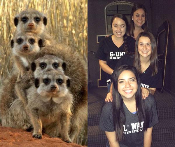 sorority sisters posing like meerkats 8 Someone Noticed Sorority Sisters Pose Like Meerkats and There are Photos to Prove It