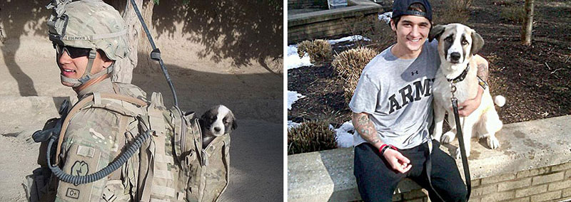 puppies dogs then and now 16 18 Then and Now Photos of Puppies/Dogs That Will Restore Your Faith in Everything