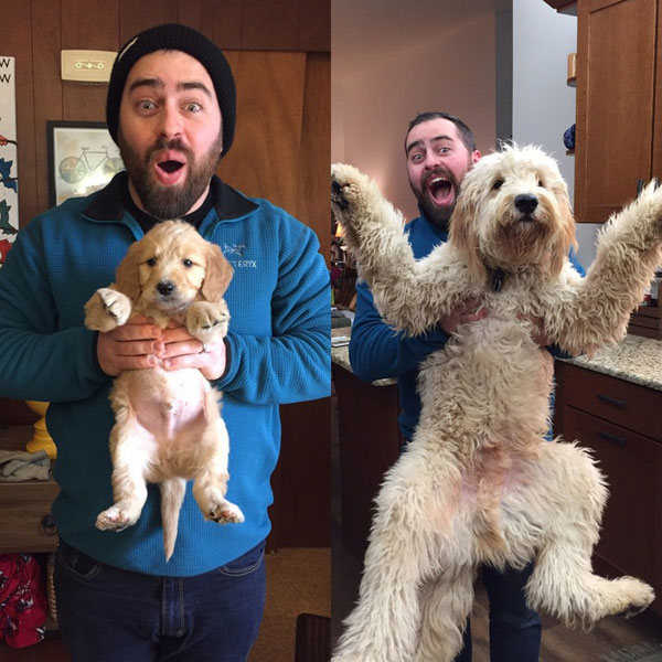 puppies dogs then and now 2 18 Then and Now Photos of Puppies/Dogs That Will Restore Your Faith in Everything
