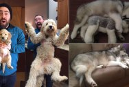 18 'Then and Now' Photos of Puppies/Dogs That Will Restore Your Faith in Everything