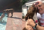 Sir Patrick Stewart is Fostering a Rescued Pit and the Two of Them are Adorable