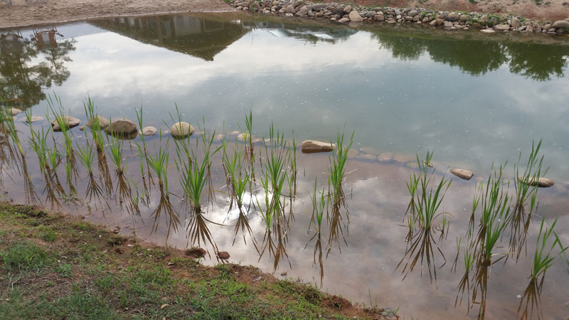 instead of an in ground swimming pool this guy built his own natural swim pond 21 Forget an In Ground Swimming Pool, this Guy Built His Own Natural Swim Pond!