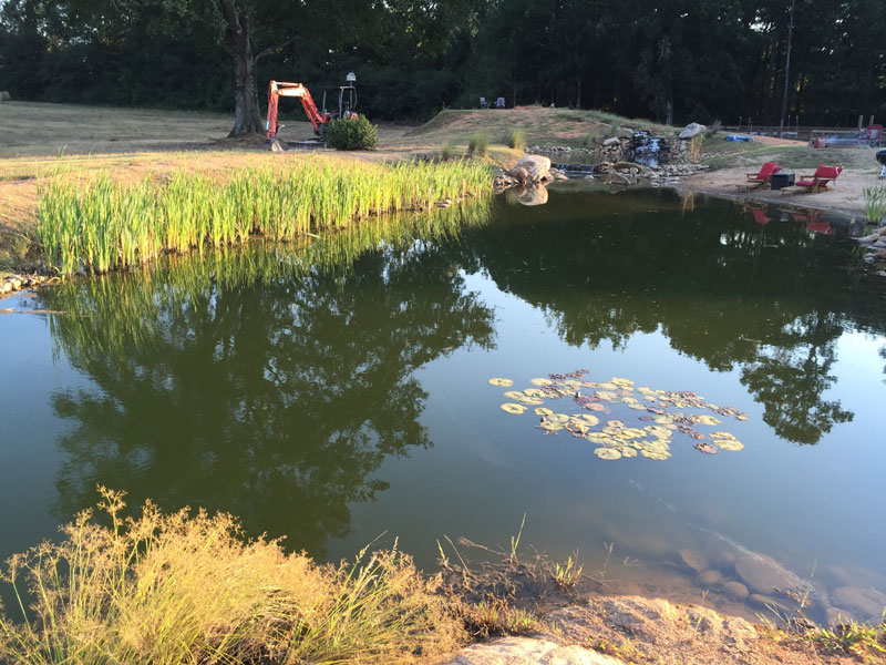 instead of an in ground swimming pool this guy built his own natural swim pond 3 Forget an In Ground Swimming Pool, this Guy Built His Own Natural Swim Pond!
