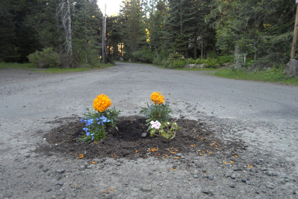 planting flowers in potholes 5 People are Planting Flowers in Potholes Because Cities Arent Fixing Them