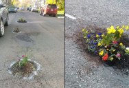 People are Planting Flowers in Potholes Because Cities Aren't Fixing Them