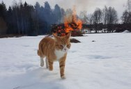 Picture of the Day: Villain Cat