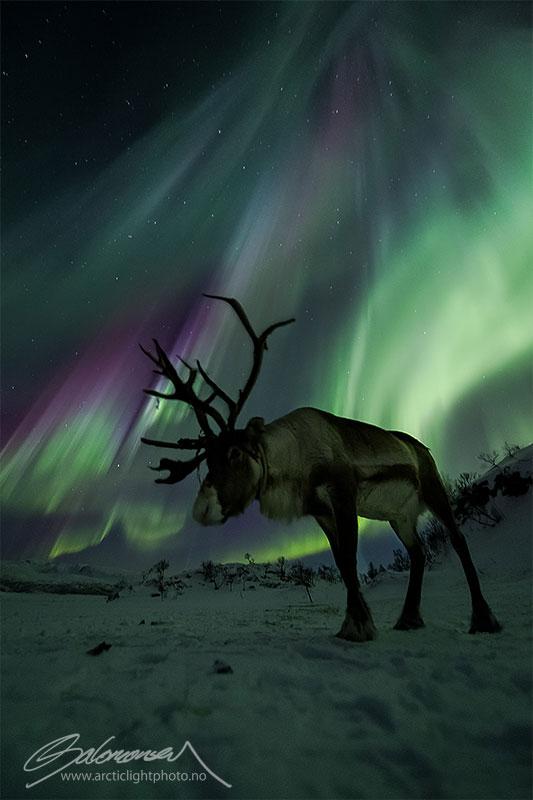 33 best auroras nasa has ever featured 15 The 33 Best Aurora Photos NASA Has Ever Featured