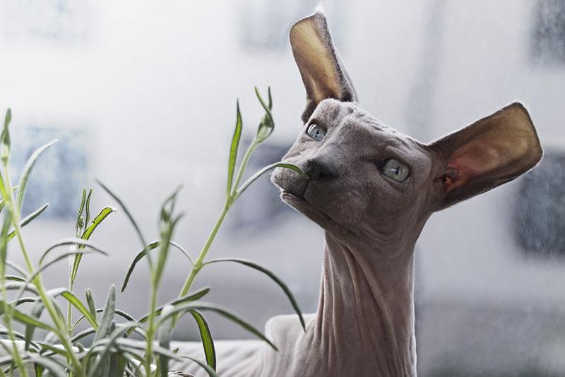 aditya aryanto gives real life animals the minecraft treatment 10 Artists Gives Real Life Animals the Minecraft Treatment