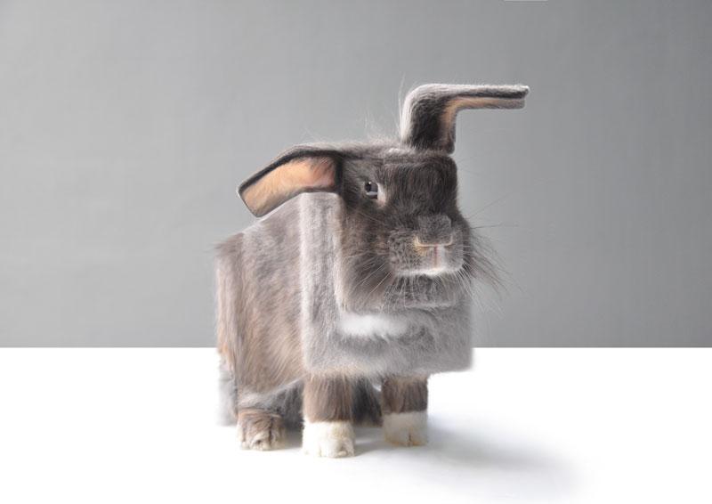 aditya aryanto gives real life animals the minecraft treatment 2 Artists Gives Real Life Animals the Minecraft Treatment