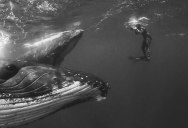 Swimming With Giants