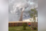 When a Tornado's Coming But Your Lawn is Life