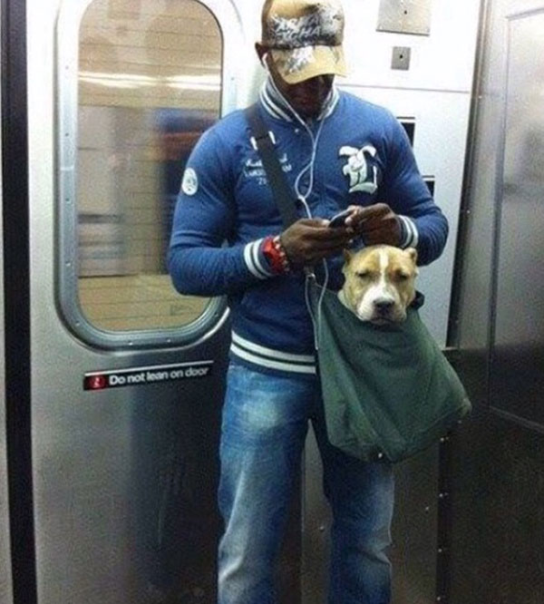 dogs in bags on new york city subway 10 The MTA Banned Dogs on the Subway Unless They Fit in a Bag, but this is New York City