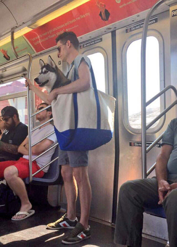 dogs in bags on new york city subway 2 The MTA Banned Dogs on the Subway Unless They Fit in a Bag, but this is New York City