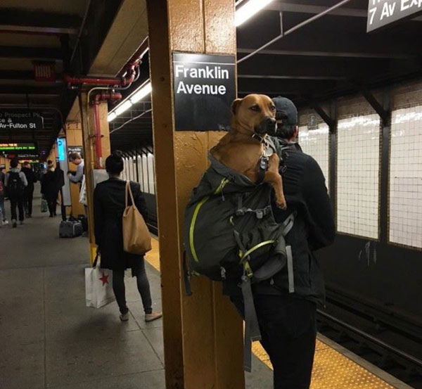 dogs in bags on new york city subway 3 The MTA Banned Dogs on the Subway Unless They Fit in a Bag, but this is New York City