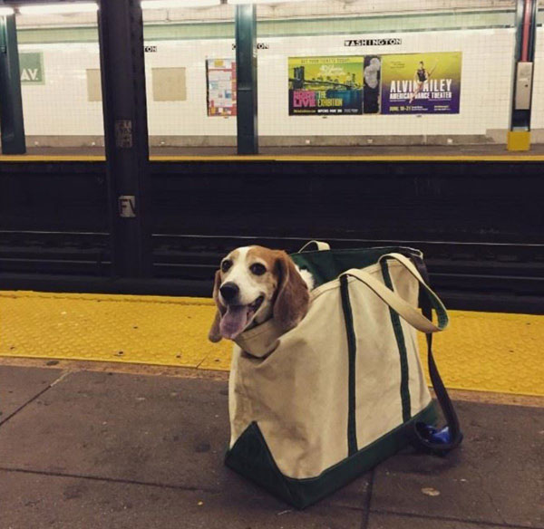 dogs in bags on new york city subway 5 The MTA Banned Dogs on the Subway Unless They Fit in a Bag, but this is New York City