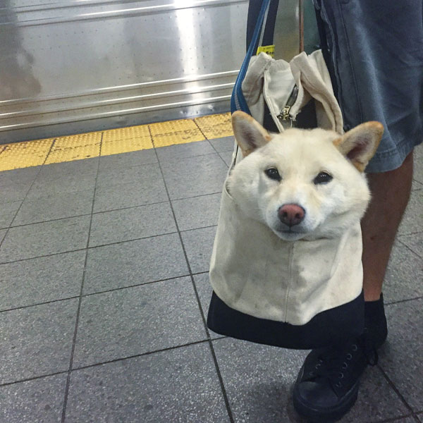 dogs in bags on new york city subway 7 The MTA Banned Dogs on the Subway Unless They Fit in a Bag, but this is New York City