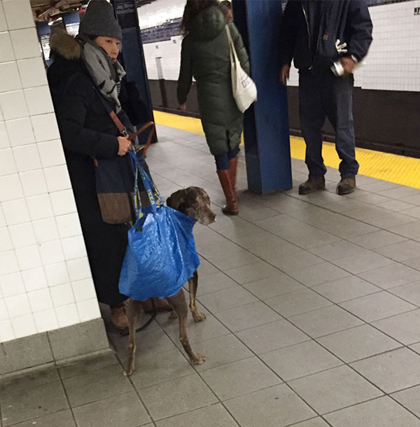 dogs in bags on new york city subway 8 The MTA Banned Dogs on the Subway Unless They Fit in a Bag, but this is New York City
