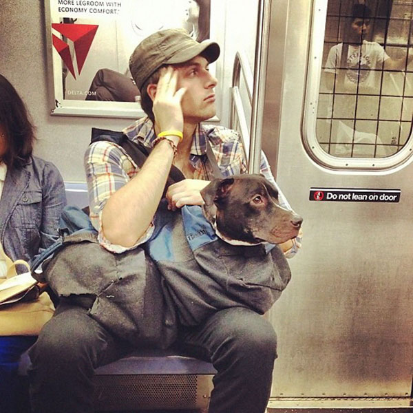 dogs in bags on new york city subway 9 The MTA Banned Dogs on the Subway Unless They Fit in a Bag, but this is New York City