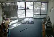 A Gang of Roving Goats Vandalized a Local Office and There's Security Footage to Prove It