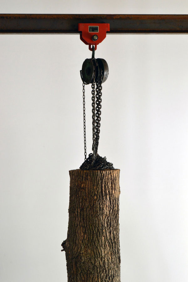 schrodingers wood by maskull lasserre 9 This Was Carved from a Single Ash Tree Trunk