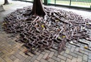 Picture of the Day: Concrete Roots