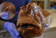 Male/Female Anglerfish are the Most Different in the World and the Way They Mate is Insane