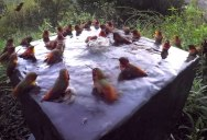 This Hummingbird Pool Party is Everything I Hoped For