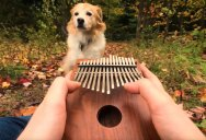"""Elvis Presley's """"Can't Help Falling In Love"""" on a Kalimba is Chill"""
