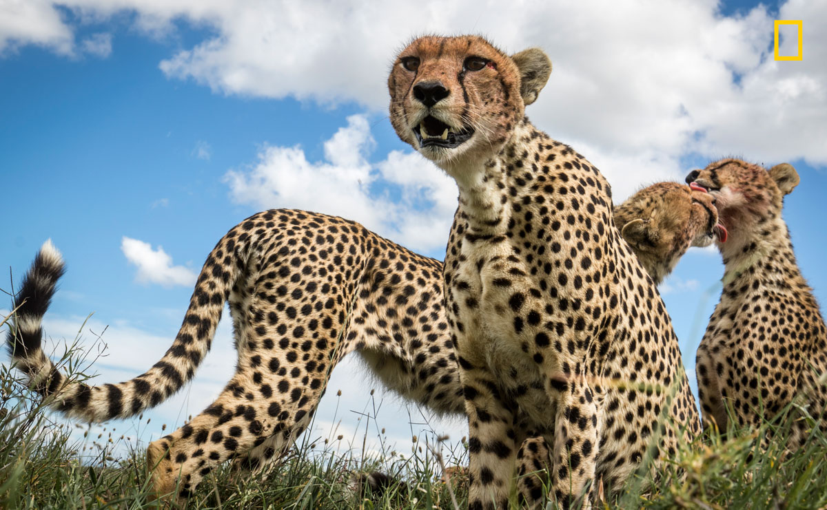 prod yourshot 1405136 10983077 011 12 Amazing Highlights from the 2017 Nat Geo Nature Photographer of the Year Contest
