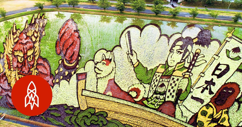 Once a Year This Japanese Town Comes Together to Grow Masterpieces With Rice