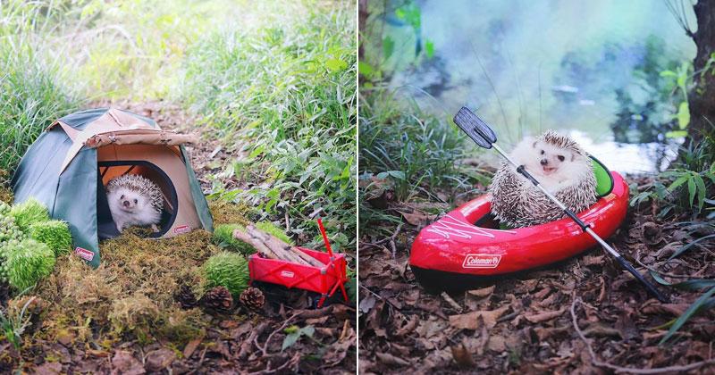 Tiny Japanese Hedgehog Goes on Big Awesome Camping Trip