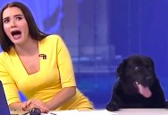The Best News Bloopers of 2017 are Here and They're Glorious