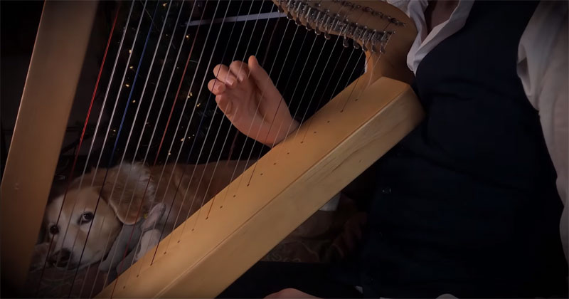 Carol of the Bells on a Harp + Bonus Dog Reaction for Extra Soothingness