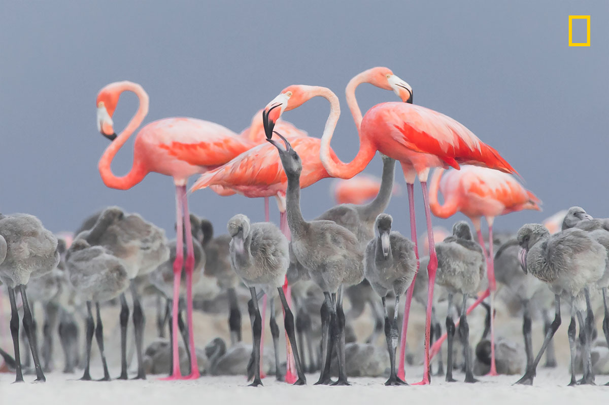 ngnp 2ndplace wildlife The 2017 Nat Geo Nature Photographer of the Year Winners are Here and Amazing