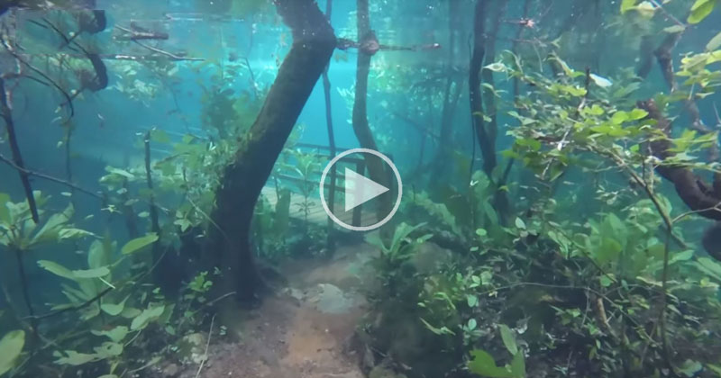 Flooding in Brazil Turns Nature Trail Into Surreal Underwater Fantasy World