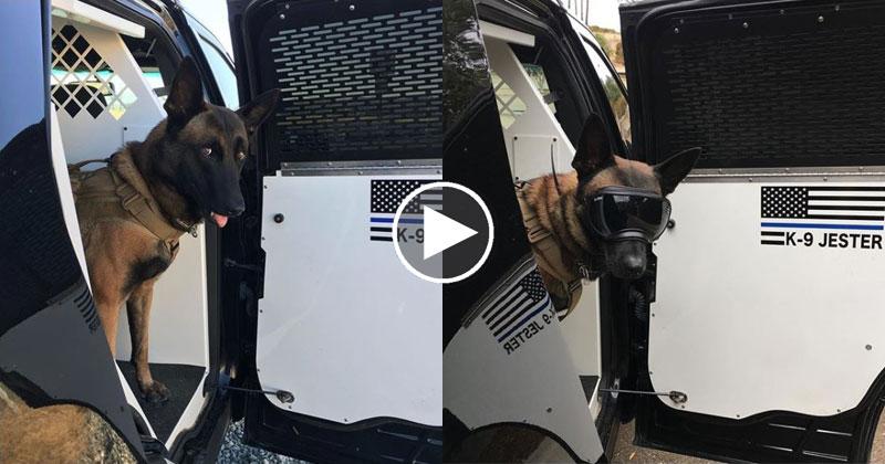 K9 Police Dog Makes the Best Entrances Ever