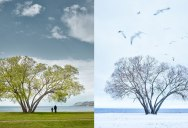 The Broccoli Tree: A Parable on Love, Loss and the Human Condition