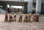 Therapy Dogs Waiting to Welcome Back the Parkland High School Students