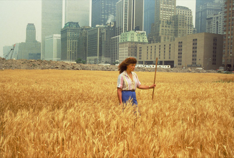 wheatfield by agnes denes 1 In 1982, An Artist Harvested Two Acres of Wheat on Land Worth $4.5 Billion