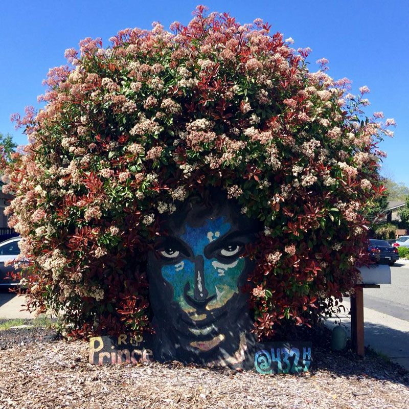 blossoming tribute to prince by christine stein 1 A Blossoming Tribute to Prince