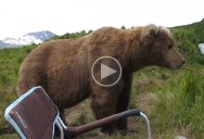 Chill Bear Casually Sits Next To Guy Beside River
