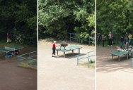 The Life and Times of an Outdoor Ping Pong Table (8 pics)