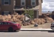 Neighborhood in California Gets Buried in Tumbleweeds