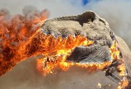 A Life-Size Animatronic T-Rex Burst Into Flames and the Pics are Metal AF