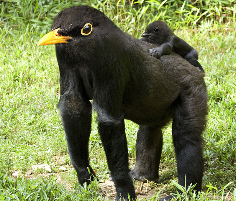 birdrilla This Guy Combines Animals in Photoshop and Now I Dont Know Whats Real