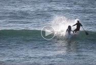 Dolphin Body Slams Boarder for Captive SeaWorld Brethren