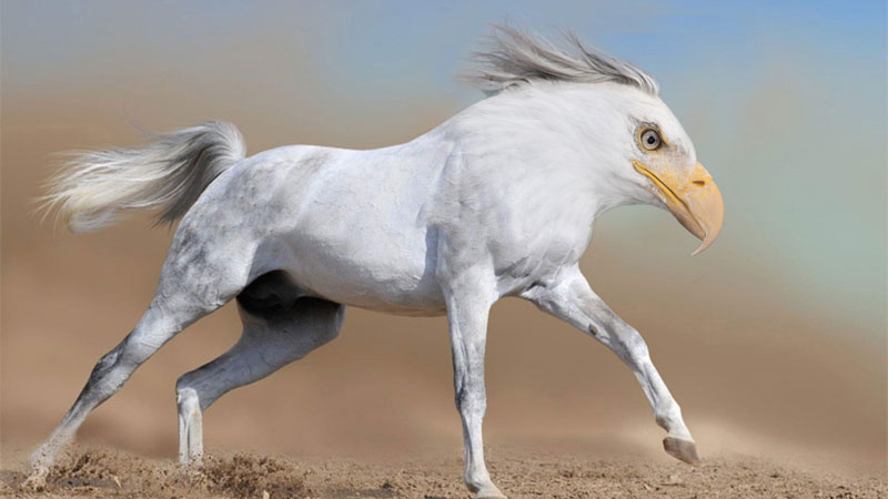 heagle This Guy Combines Animals in Photoshop and Now I Dont Know Whats Real