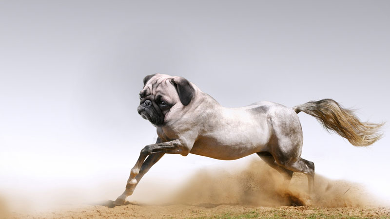 porse This Guy Combines Animals in Photoshop and Now I Dont Know Whats Real
